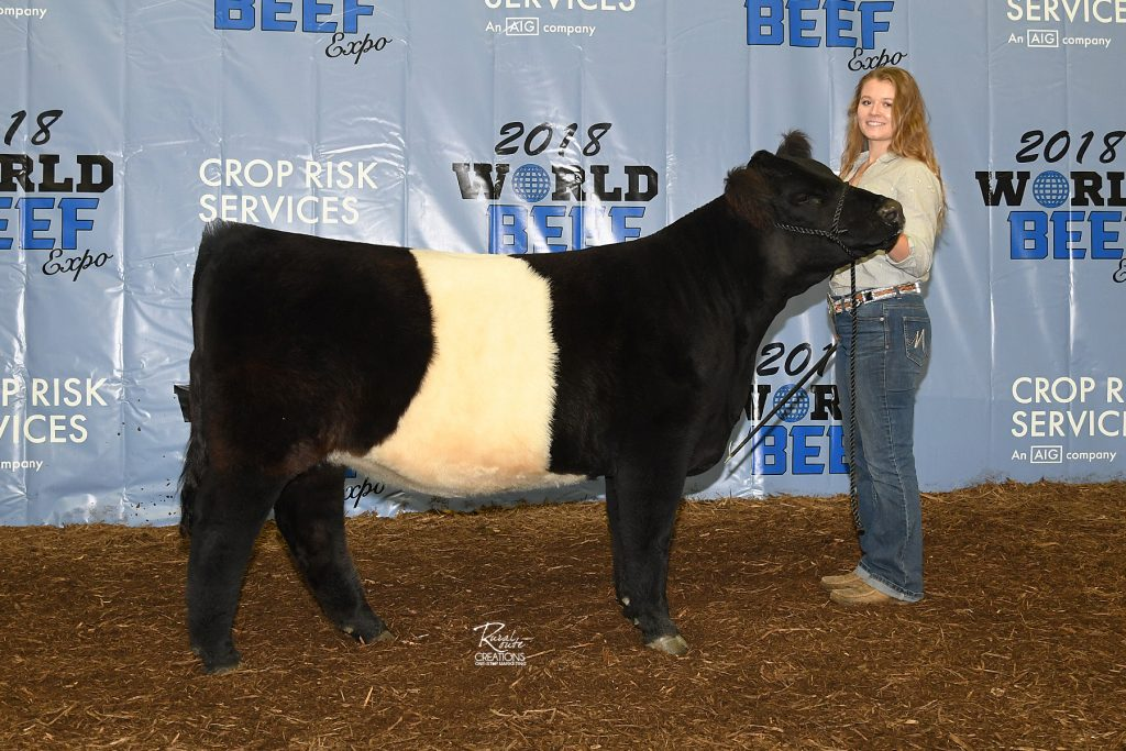 HC Sims Farms Belted Galloway Show