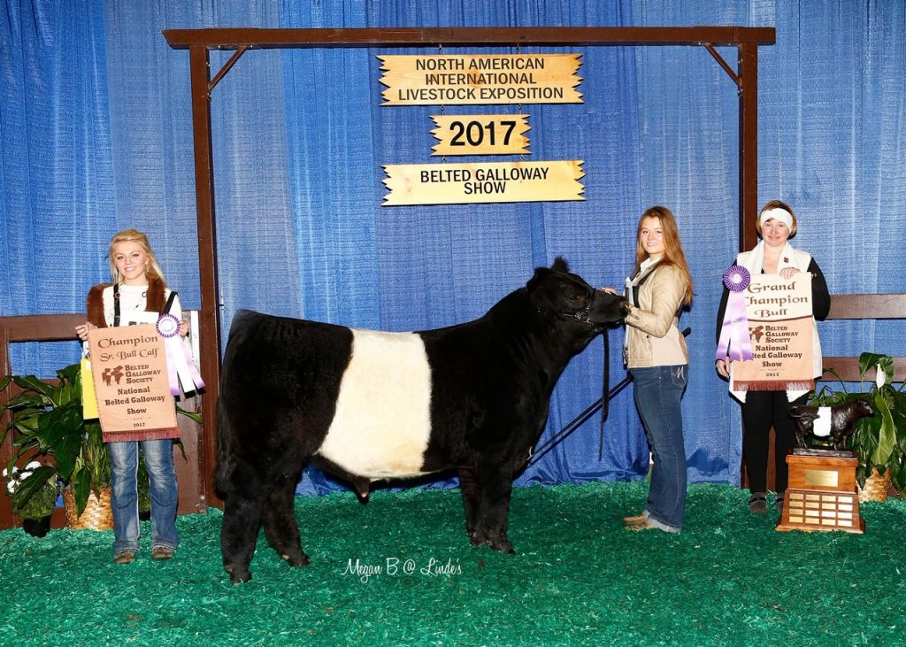 HC Sims Farm - Belted Galloway